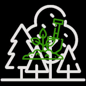 Miško sodinimui